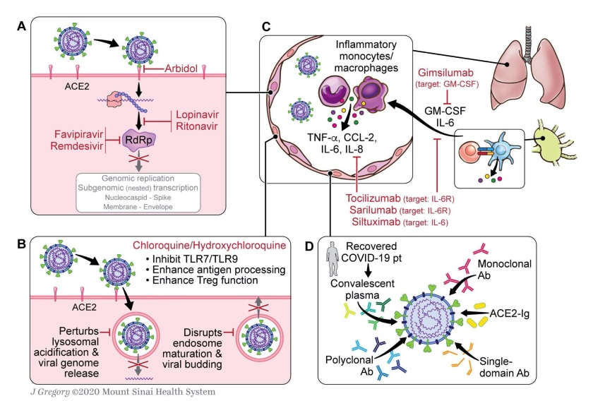 2020_Immunology_of_COVID19