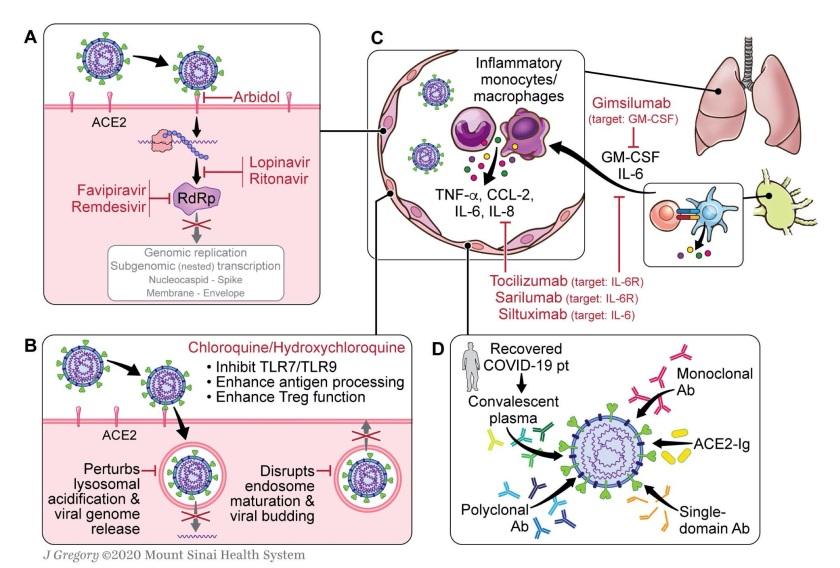 2020_Immunology_of_COVID19